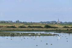 Réserve naturelle Michel Brosselin à St Denis du Payré. #oiseaux, oiseaux migrateurs. ©Pascal Baudry pour Sud Vendée Tourisme. Plus d'info : www.sudvendeetourisme.com