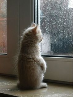 Yeap, as i suspected.. Dogs doesn't like to get weat either. Should i let him in now?#Repin By:Pinterest++ for iPad#