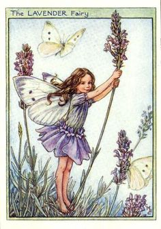 I've always loved the Flower Fairy illustrations! By Cicely Mary Barker