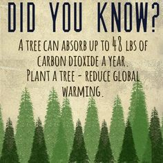 Did you know? A tree can absorb up to 48 lbs of carbon dioxide a year. Plant a tree - reduce global warming.