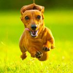 5 Great Benefits of Dog Sports