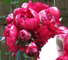 The bride chose dark red peonies for her bridal bouquet.