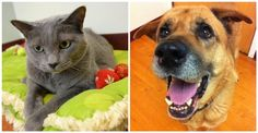 FOX Furry Friends of the Week: Senior pets Misty and Susie - Chicago News and Weather | FOX 32 News 9/16/13 #pawschicago #adoptable #pets