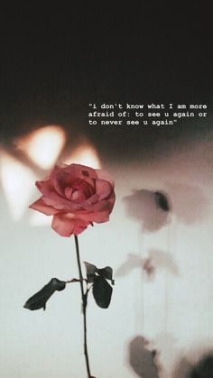 This is so fucking on point but now my fear to see u again has become more powerful then never seeing u again . U r safe far away from me tc . Words Wallpaper, Sad Wallpaper, Wallpaper Quotes, Rose Quotes, Flower Quotes, Aesthetic Roses, Quote Aesthetic, Aesthetic Bedroom, Snap Quotes