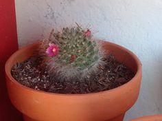 En flor Cactus Y Suculentas, Planter Pots, Flower, Plant Pots