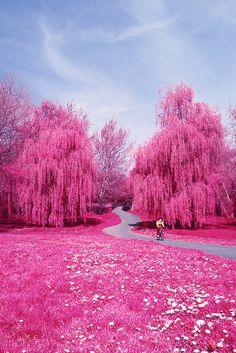 Colour Infrared. Canterbury, spring 2010 by chris_martin101