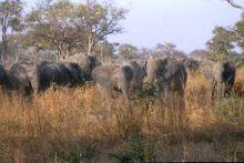 #Kamerun erleben, #Löwen, #Giraffen, #Elefanten, #Gazellen informieren sie sich jetzt! Elephant, Travel, Animals, Elephants, Africa, Animales, Trips, Animaux, Viajes