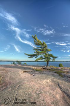 Iconic lonely windswept pine tree at killbear, High Dynamic Range process Big sky, with lazy clouds, water and that great rock of the exposed canadian shield. Landscape Photos, Abstract Landscape, Rainbow Eucalyptus Tree, Lord Murugan Wallpapers, Algonquin Park, Pine Tree Tattoo, Tree Photography, Photo Tree, Ciel