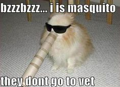 Funny meme of cat dressed like a mosquito.