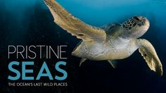 National Geographic Museum, DC - Pristine Seas: The Ocean's Last Wild Places.  #dc #dcsights
