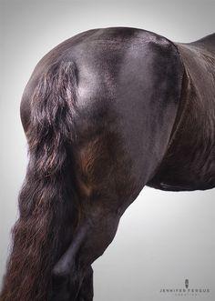 jwww.pegasebuzz.com | Equestrian photography : Jennifer Fergus