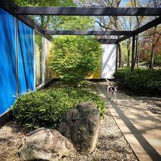 The Frost House - Paul McCobb - exterior Mid Century Style, Mid Century House, Mid Century Modern Design, Outdoor Retreat, Green Garden, Modern Architecture, Frost, Indoor Outdoor, Mid-century Modern