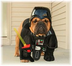 50 Dogs In Star Wars Costumes – | VH1 Celebrity