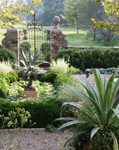 gate, gravel, boxwood & succullent...all green & low maint Garden