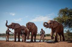 Elephants at Buffelsdrift Game Lodge