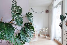 Introducing: our designer Marén from Cologne. Retro inspired dining room with urban jungle style Monstera.