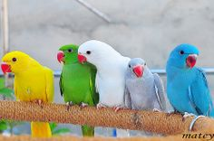 We are one family by   matey_88 ( OFF ), via Flickr