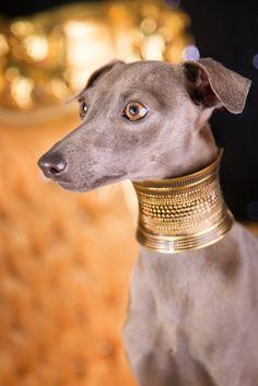 Gold greyhound by Alessandro Manco