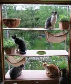 Katzenbalkon Fenster