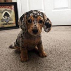 わしゃわしゃしたくなる!愛くるしい子犬たちの画像まとめ