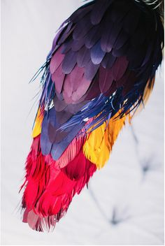 Paper Art - Feathers - by Diana Beltran Herrera