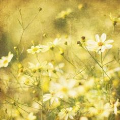 Daisies=) The flower of purity<3