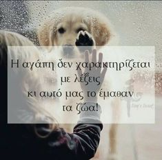 Dog Quotes, Animal Quotes, Life Quotes, Kindness To Animals, Feeling Loved Quotes, Couple Presents, Greek Words, Greek Quotes, Powerful Quotes