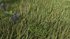 Grass technical rendering. 2014