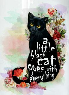 Memories of my little black cat Flospey and thinking of my cat Harry Hairball aka Houdini - both rescue cats Cool Cats, I Love Cats, Draw Cats, Cats Wallpaper, Here Kitty Kitty, Kitty Cats, Hello Kitty, Beautiful Cats, Crazy Cat Lady