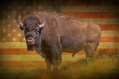 American Buffalo Bison Wild Animal with American flag background by RandyNyhofPhotos