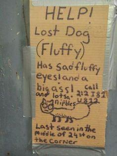 Haha, help lost dog, thank you hurricane Sandy