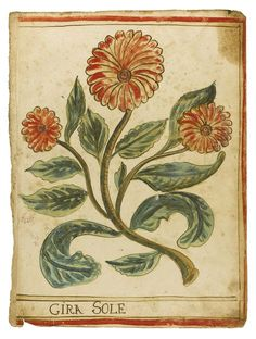 Medical manuscript | Lot | Sotheby's