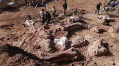 Titanosaur (dinosaur) fossil site photographed in Argentina.