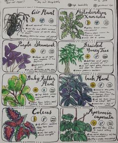 Throw Some Herbs On That Shit — Finally finished pages three and four of the. Bullet Journal Writing, Bullet Journal Ideas Pages, Book Journal, Journals, Garden Journal, Nature Journal, Herbal Magic, Magic Herbs, Just Add Magic