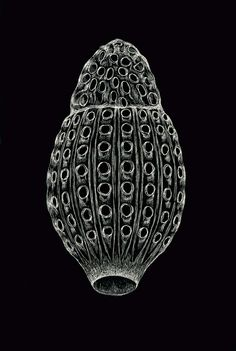 Large-scale rendering of a radiolarian, a microscopic single-celled ocean dweller.