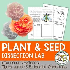 Plant and seed dissection activity