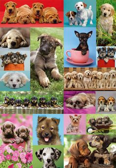 Clementoni Puzzle, Puzzle 1000, Cute Puppies, Dogs And Puppies, Dog Calendar, Puppy Pictures, Puppy Pics, Dog Puzzles, Free Online Jigsaw Puzzles