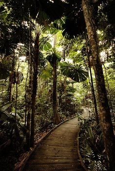 The Dubuji Boardwalk takes the visitor through stands of rainforest palms before exiting at Myall Beach, Cape Tribulation.