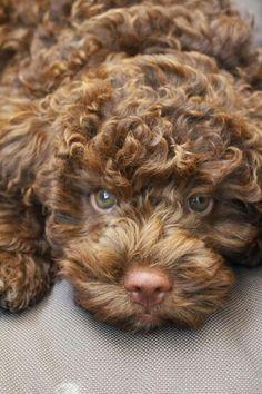Puppy cutness