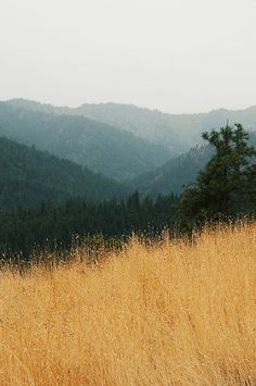 Hello September by ttwice, via Flickr _ taken in Dryden, Washington, USA