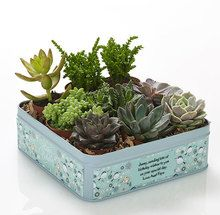 """If you can't be there on the big day, send the sweetest, happiest returns in your place. This square keepsake tin of aromatic succulents is ready and waiting to bear your extra-special greeting - printed for free! """"Happy Birthday"""" will be printed on the label as well as your personal message"""