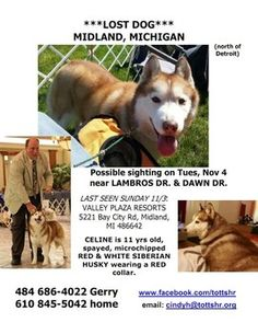 Senior show dog lost in Michigan. Please take a moment to share Celine's information with the hopes that she is found and reunited with her family.     Red and white Siberian husky     11 yrs old     Microchipped     Spayed     Red collar Anyone with information is asked to contact Gerry Hess at (484) 686-4022 or (610) 845-5042, please follow the search effort this Facebook page, or email cindyh@tottshr.org