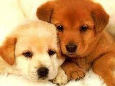 Risultati immagini per cani piccoli