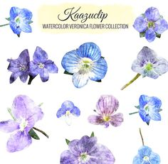 Watercolor Veronica Flower Collection  Commercial and by kaazuclip