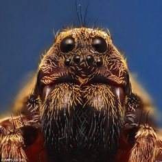 Call me crazy, but I love spiders.  They are so intricately assembled.