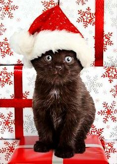 Christmas cat https://www.amazon.com/Painting-Educational-Learning-Children-Toddlers/dp/B075C1MC5T