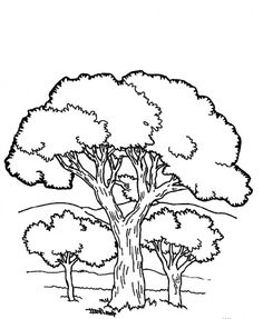 A View Of Trees And Beautiful Mountain Coloring Pages