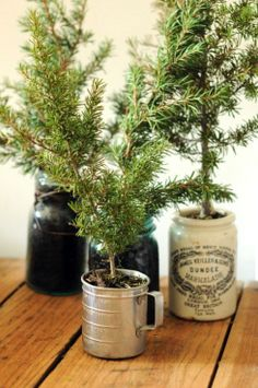 pine branches in vintage pots