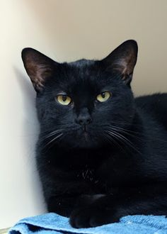 Meow-Wow is looking for his forever home #adoptdontshop #cats