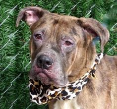 JIM THORPE IS SUPER URGENT!!~~  SHARE TO SAVE THIS SWEET BOY!!~~~Dedicated to Saving NYC Shelter Animals